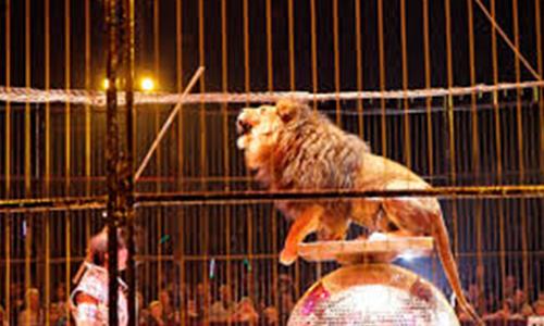 En finir avec les cirques avec animaux à ST Malo