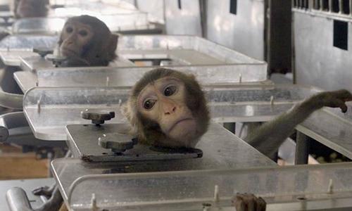 Pour une meilleure protection des animaux de laboratoire