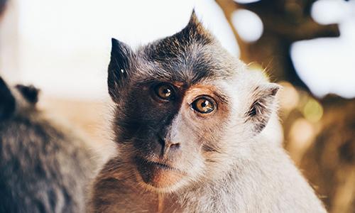 Demandons aux télévisions d'interdire toute représentation d'animaux sauvages dans leurs émissions réalisées en public !