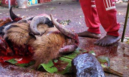 Pour l'arrêt des atroces sacrifices animaux lors de la dite Fête de Tamoul sur votre île !
