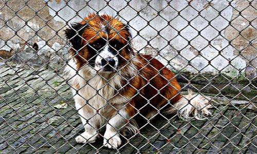 Se mobiliser pour porter plainte contre toutes tortures d'animaux reconnus comme êtres sensibles