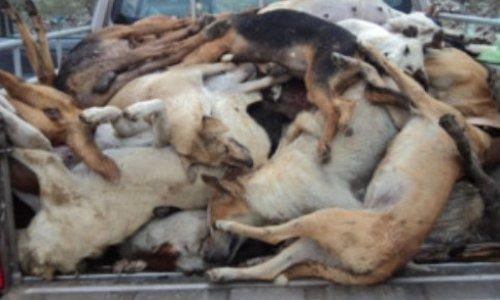 SCANDALE : Un permis de tuer les chiens dans l'île de la Réunion