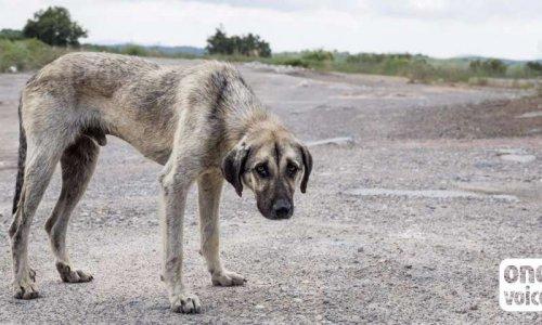 Pétition : Contre le projet d'extermination systématique des chiens errants à La Réunion