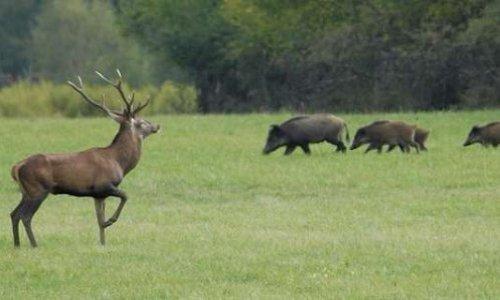 Instaurer le dimanche comme jour sans chasse