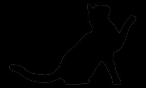Anima'Coeur est la deuxième chance des chats sans foyer !