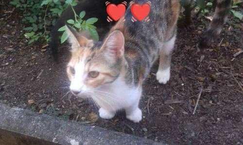 Pour récupérer Kitty, jeune chatte, prise de force à sa propriétaire par la SPA de Strasbourg sous prétexte qu'elle ait fugué deux fois du domicile.