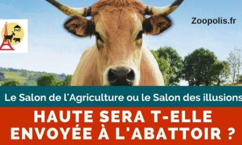 Pétition : Pour que Haute, vache égérie du Salon de l'Agriculture, ne finisse jamais à l'abattoir