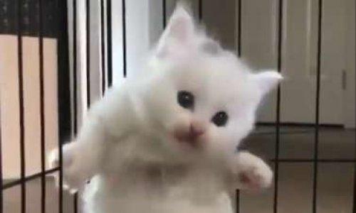 Sauvons les chats torturés en cage !