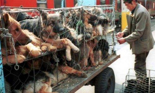 Stoppons définitivement le festival Yulin