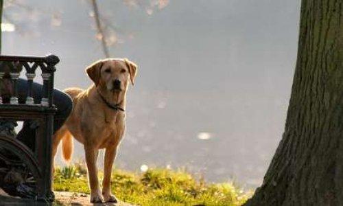 Pour un parc à chiens à Clermont