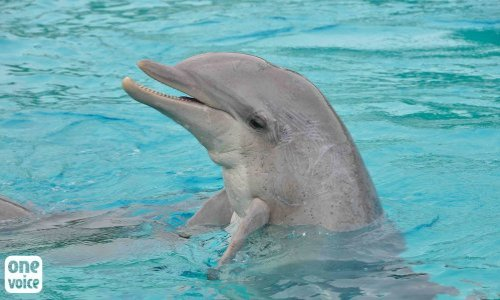 Petition : Minister, take action for the dolphins