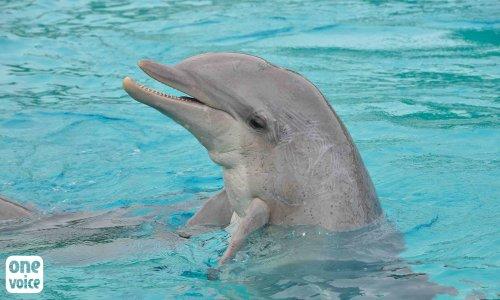 Pétition : Madame la Ministre, agissez pour les #dauphins