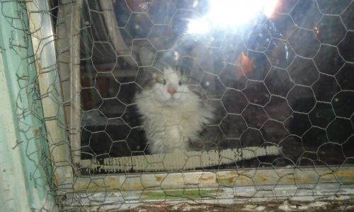Monsieur le Maire, aidez vos citoyens à améliorer le sort des chats de Mercier-Hochelaga Maisonneuve