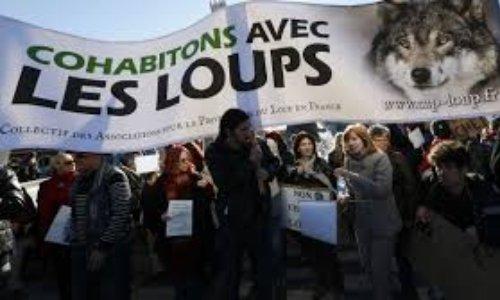Pétition : Pour la cohabitation avec les loups ! #SOSloups