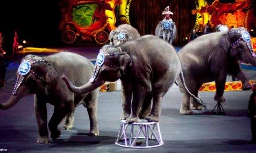 Non aux cirques avec animaux à Beauvais