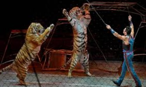 NON aux cirques avec animaux à Roubaix ! #CirquesSansAnimaux