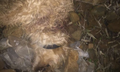 Justice pour le chien Tony