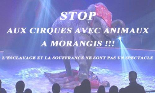 Lettre au Maire de Morangis : stop aux cirques avec animaux #CirquesSansAnimaux