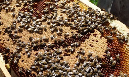 Pétition : Sauvegardons les abeilles et les apiculteurs en France