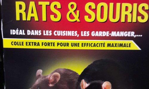 Pétition : Stop aux pièges à Glu pour souris & rats !