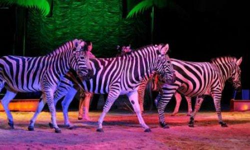 Oui aux cirques avec animaux