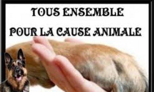 Faisons évoluer la Cause Animale !