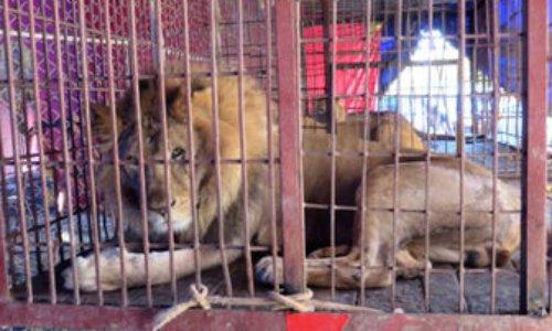 Pour l'interdiction des cirques avec animaux à Château-Thierry.