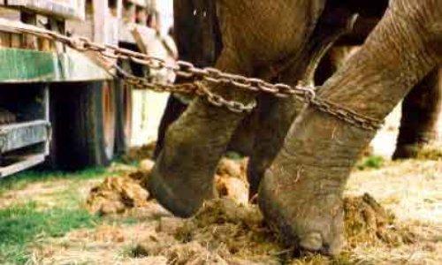 Pour que la ville de Gap interdise la venue des cirques avec animaux sur son territoire