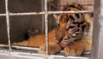 Pétition : Préservation de la biodiversité, protection des animaux : pas de cirques avec animaux à Paris
