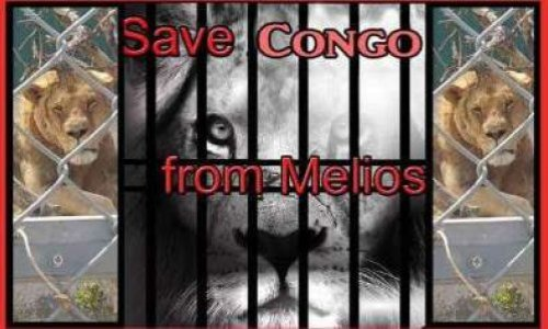Petition : Save Congo the lion from Melios!