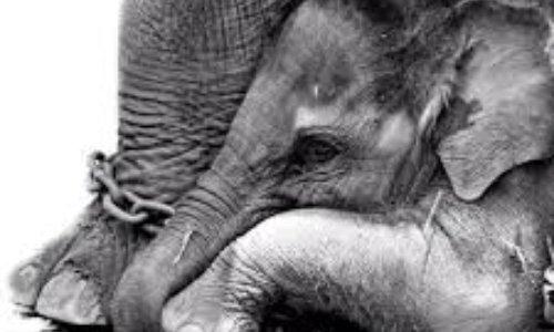 Non aux cirques avec animaux à Cannes