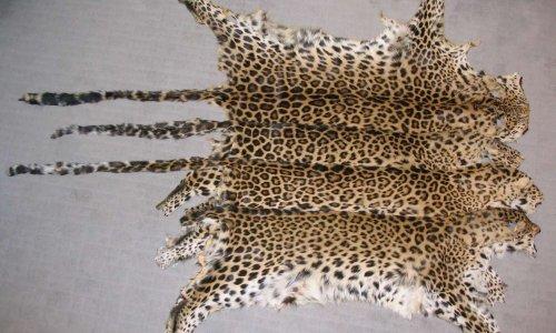Pour l'arrêt de la fourrure chez le couturier Jean-Paul Gaultier