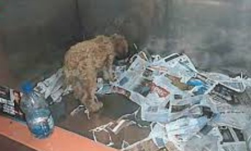 Oui à l'adoption...Non l'achat... Les animaux ne sont ni propriété, ni objet (fin des élevages de races, vente en animalerie) Vidons les cages!!!