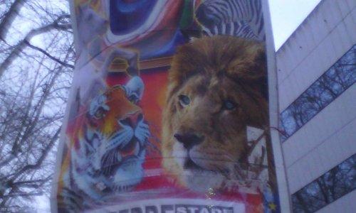 STOP aux cirques avec animaux