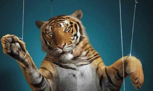 NON aux cirques avec animaux à Senlis