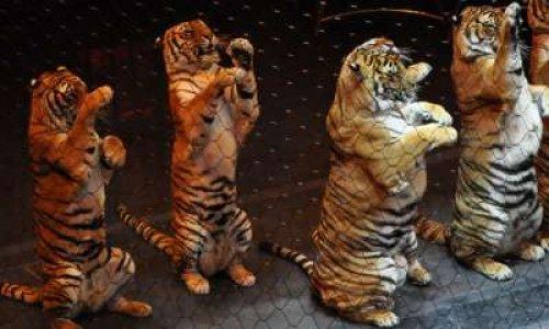 Plus jamais de cirque avec animaux à Seingbouse !