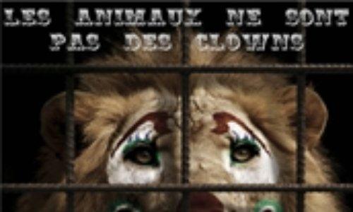 Pour le respect des animaux qui ne sont pas des jouets dire non au cirque