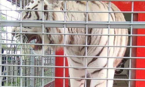 Pour des cirques sans animaux sauvages à Argenteuil