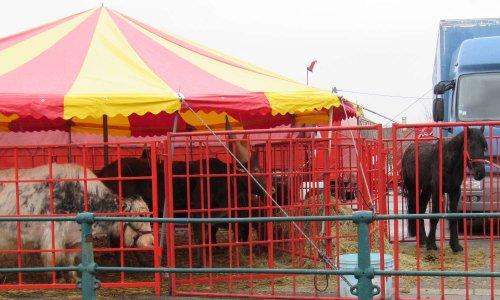 Plus de cirques avec animaux à Marquise