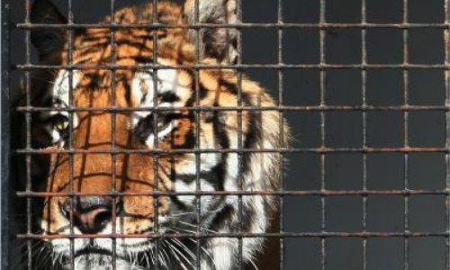Pour l'interdiction des cirques avec animaux à Reims.