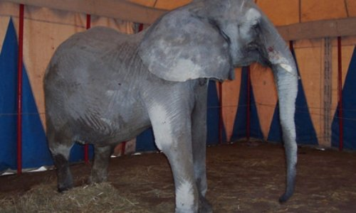STOP aux cirques avec animaux à Toulon ( Var)