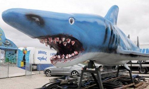 Pour l'interdiction d'Aquatic Shark, entreprise de souffrances et d'esclavage des requins et des otaries en Occitanie !
