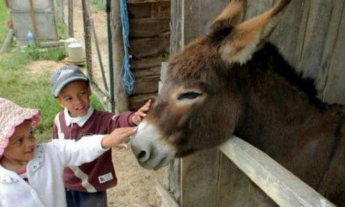 Pour une nouvelle matière à l'école : l'empathie envers les animaux