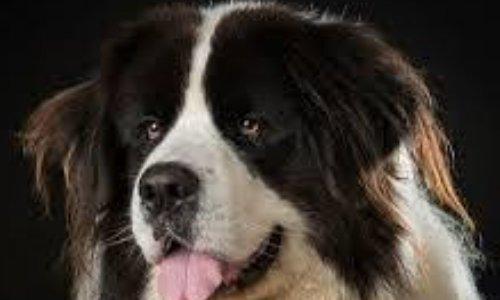 Arrêter d'infantiliser votre chien