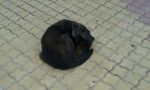 Urgent - aide aux volontaires à Sotchi, Russie pour sauver les chiens errants