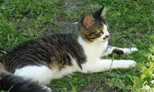 Pour le retour immédiat du chat Clover dans son foyer