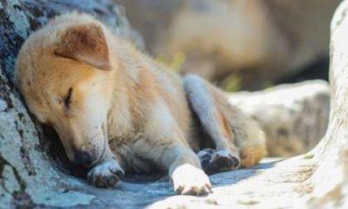 Pétition : Non aux massacres des chiens errants d'Agadir