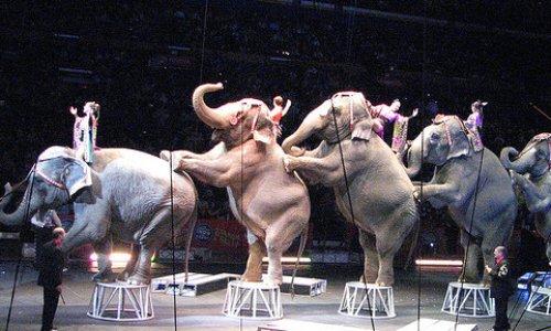 Pour une France avec des cirques mais sans animaux, pour une France sans cruauté, ni torture animale