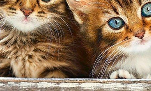 Non aux abandons et à la maltraitance des chiens et chats