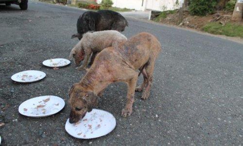 Pour la stérilisation des chiens/chats errants et la création d'un centre d'accueil pour ces animaux orphelins à Tahiti